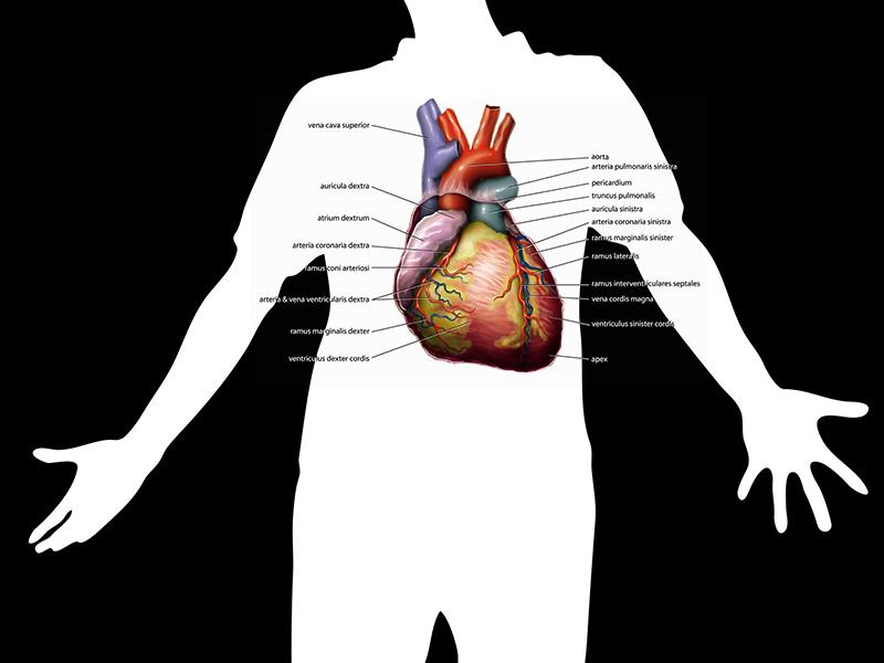 magas vérnyomás 1 fokos tünetek és kezelés népi gyógymódok másodfokú hipertónia és kezelése