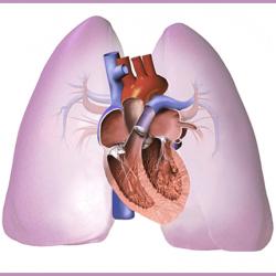 a magas vérnyomás típusainak kezelése veszteség magas vérnyomásban