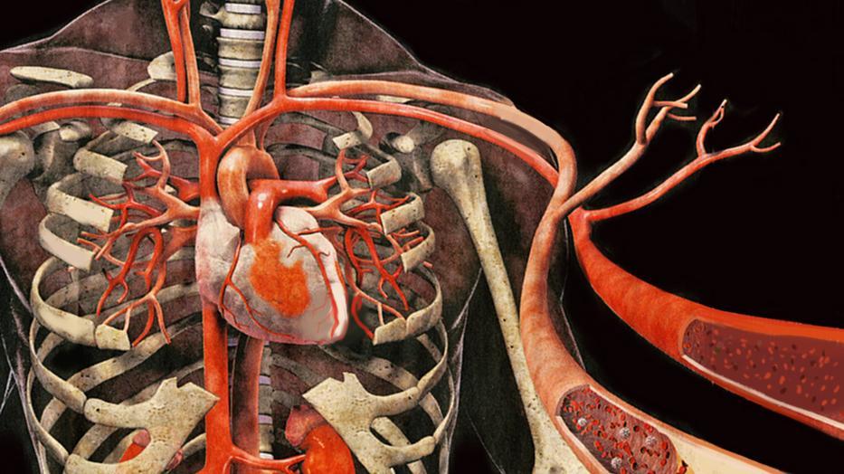 a vérerek magas vérnyomásban az életkorral összefüggő magas vérnyomás gyermekeknél