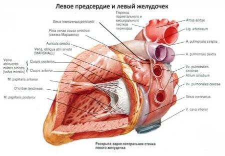 Rendszeres kontrollal a hirtelen szívhalál megelőzhető