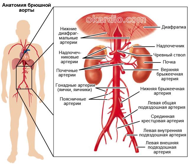 hogyan lehet megszabadulni a magas vérnyomással járó hányingertől magas vérnyomás alacsony vérnyomás
