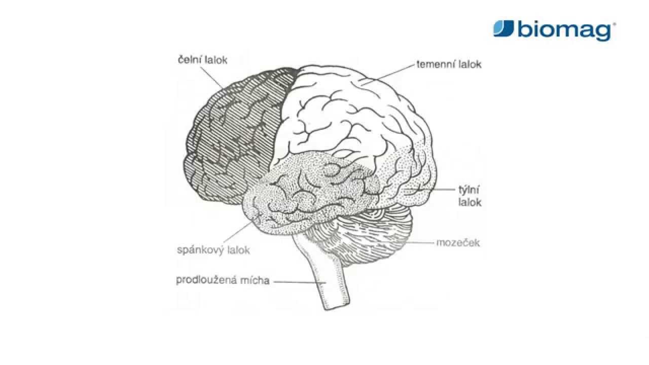 miben különböznek a hipertónia fokozatai