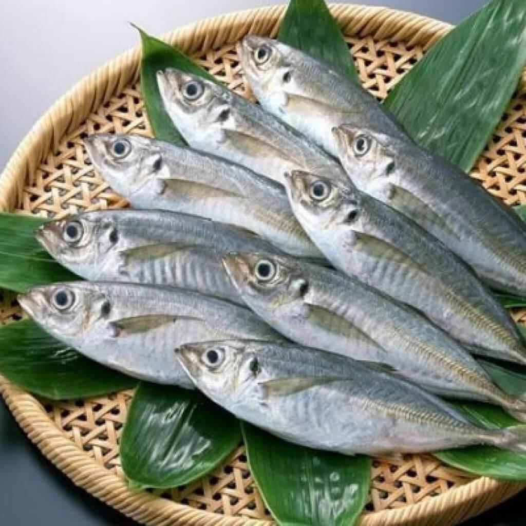 magas vérnyomású tengeri halak magas vérnyomás tüdő tünetei