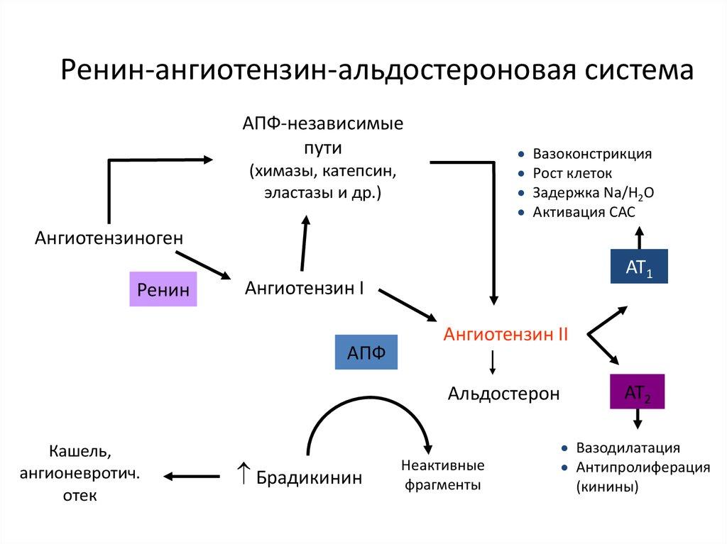 osteochondrosis és magas vérnyomás kezelés népi gyógymódokkal
