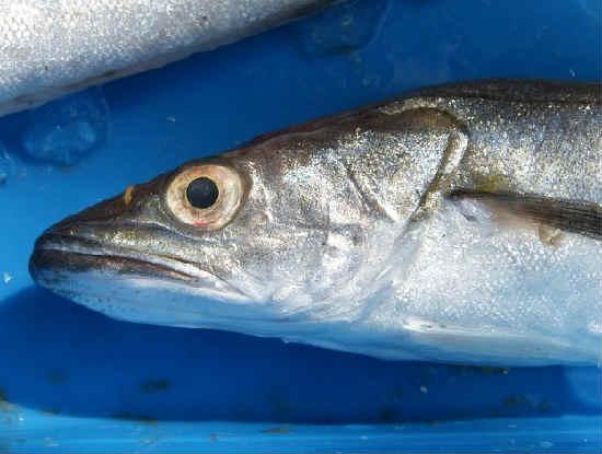 hogy a hal mennyire hasznos magas vérnyomás esetén