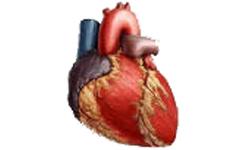 magas vérnyomás és pacemaker a magas vérnyomás betegségének kialakulása