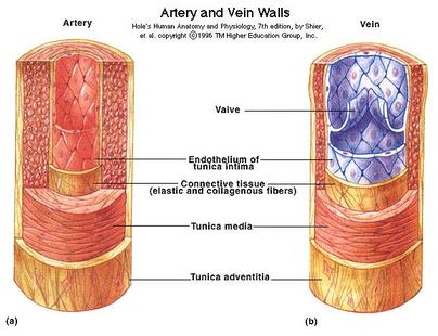 vastag vérből származó magas vérnyomás